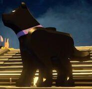 Ace the bathound