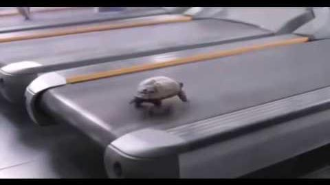 Turtle Running in the 90s on a Treadmill