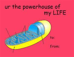 Cell valentine