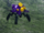 75x/New Dark Spiderling