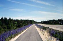 Blåeld-vid-nya-cykelbanan-Toftavägen-2000-Fotograf-Sven-Hallgren-800x528