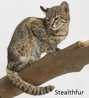 Stealthfur