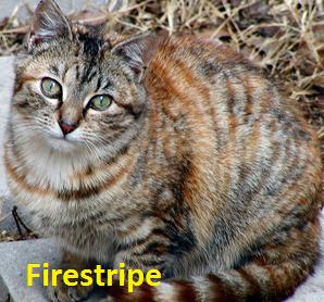 Firestripe