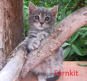 Fernkit