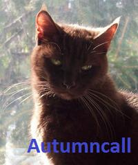 Autumncall