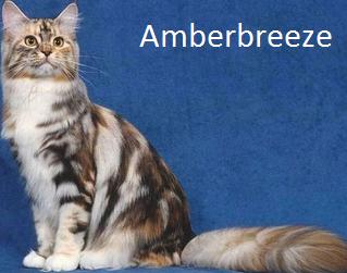 Amberbreeze