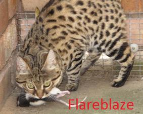 Flareblaze