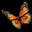 Чарівний світ метеликів!
