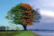 4seasons1tree