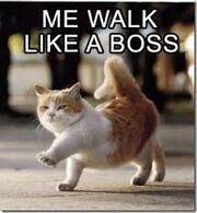 Bosscat