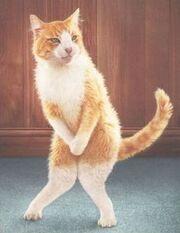 Poo cat