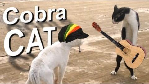 COBRA CAT - PAROLE DE CHAT