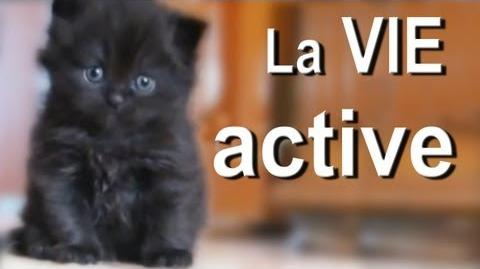 LA VIE ACTIVE - PAROLE DE CHAT