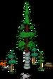 Plus gros séquoia du monde 5