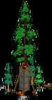 Plus gros séquoia du monde 6