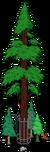Plus gros séquoia du monde 8