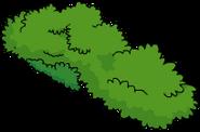 Arbuste4