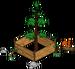 Plus gros séquoia du monde 3