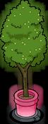 Holo-arbre de promenade
