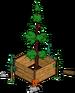 Plus gros séquoia du monde 4