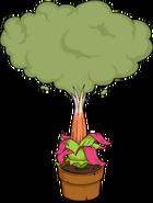 Fleur du siècle de Sumatra Activé