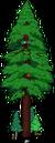 Plus gros séquoia du monde