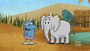 The elephant wearing Leo's hat