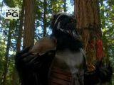 Skunkbears