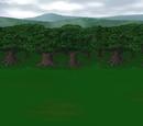 Lion Forest