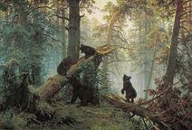Utro v sosnovom lesu