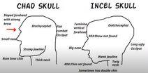 Chad skull vs Incel skull