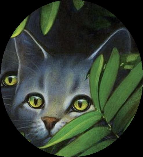 Millie Wiki La Guerre Des Clans Fandom Powered By Wikia