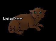 Aile de Roitelet chaton