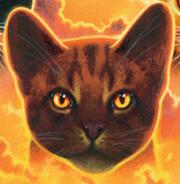 Étoile du Tigre 2