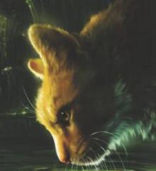 Pelage de lion-0