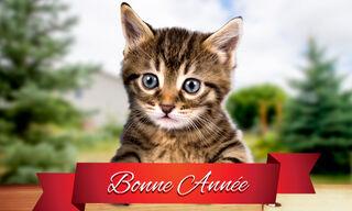 Cute cat newyear