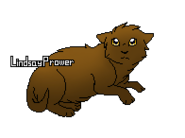 Poil de Souris chaton