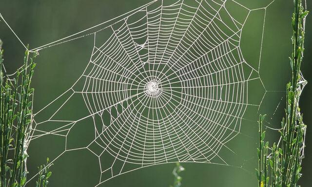 Fichier:Toiles d'araignée.jpg