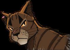 Étoile du Tigre ASiR