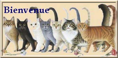 Bienvenue-profil-chat