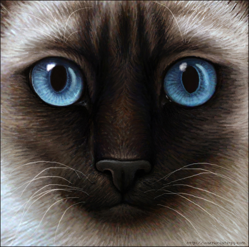 Warrior Cats A Vision Of Shadows Book 1: Warrior Cats Siamese Cat By Wynnyelle-d3iohpd.jpg