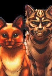 Sacha et Etoile du Tigre