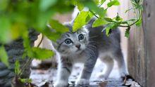 Aile de Rose,la petite chatte aventurière