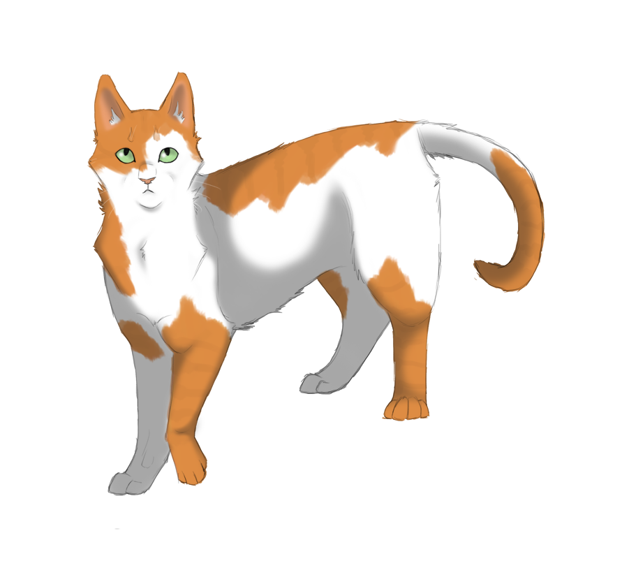 Warrior Cats A Vision Of Shadows Book 1: Image - Chat Blanc Et Roux.png
