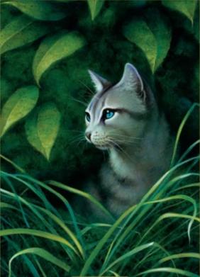 Warrior Cat Apprentie
