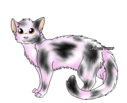 Violetshine