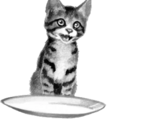 Chats domestiques
