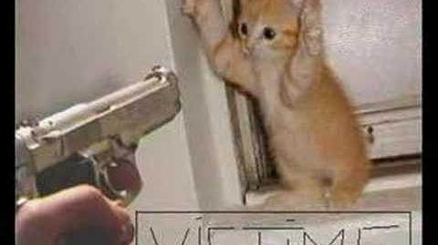 Drôle de chats