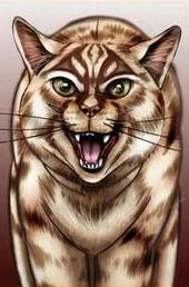Étoile du Tigre