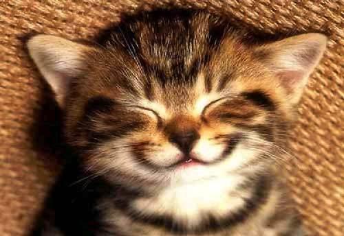 File:Smile-kitten-large.jpg
